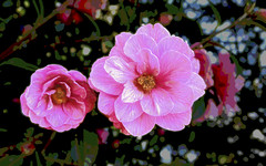 Camellia (Bobinstow2010) Tags: camellia pink westonbirt woods arty topaz