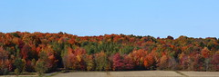 Fall Landscape with Great Foliage (pegase1972) Tags: qc qubec quebec canada montrgie monteregie fall foliage autumn tree nature automne