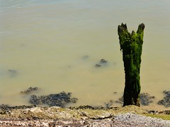 The Ouse (teaselbrush) Tags: newhaven east sussex uk england british seaside town coast coastal urban ouse river murky dank seaweed barnacles green slime slimy mud tidal