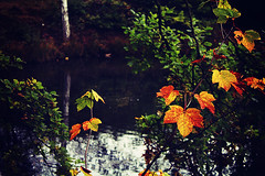 Living Colors (JaUtlnning) Tags: autumn nature czechrepublic canoneos550d leaves water