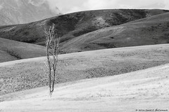 National Elk Refuge, Jackson Hole, Wyoming (David C. McCormack) Tags: americana artistic blackwhite bw blackandwhite country eos6d eos environment western tetons inspiration jacksonhole jacksonwyoming landscape mountains monochrome outdoor rockymountains nature rural spiritual wyoming west