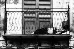 Palermo sleeping I (rob.lomb) Tags: palermo sicily blackwhite street city balcony sleeping
