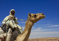 Camel Herder Going To Egypt With A Caravan, Dongola, Sudan (Eric Lafforgue) Tags: africa men horizontal walking outdoors photography day desert northafrica shepherd soedan african wildlife sudan extreme adventure camel transportation heat remote caravan wilderness turban livestock herd oneperson developingcountries globalwarming soudan trader herder herding saharadesert northernafrica traditionalclothing realpeople animalriding traveldestinations colorimage cameltrain lookingatcamera ruralscene jalabiya dongola onemanonly aridclimate  1people indigenousculture szudn sudo  nomadicpeople northernsudan northsudan      xuan eri1039