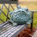 stock   Large Ceramic Frog on Bench
