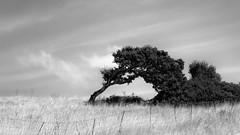 """the caress of the wind <a style=""""margin-left:10px; font-size:0.8em;"""" href=""""http://www.flickr.com/photos/96961908@N00/8709209499/"""" target=""""_blank"""">@flickr</a>"""