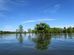 Lowcountry Unfiltered - Lake Marion Ghost Town Paddle - April 2013 (286) (greenkayak73) Tags: friends beagle nature america fun lucy southcarolina adventure kayaking ghosttown mrrussell riverdog lakemarion greenkayak73 randomconnections photopaddling lowcountryunfiltered nitrorev johnatgcc rockscemetery