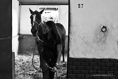 Cavalli #4 (Malacapa) Tags: horses palermo cavalli malacapa