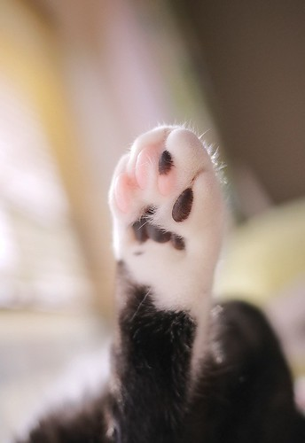 Paw in the air