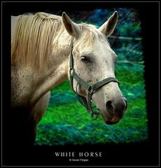 white horse portrait (www.xavierfargas.com) Tags: portrait horse naturaleza nature animals fauna caballo retrato panasonic animales hdr breathtaking whitehorse ineffable photofiltre goldenglobe photomatix caballoblanco 1xp xfp bej abigfave dmcfz50 platinumphoto lumixdmcfz50 anawesomeshot theunforgettablepictures flickrestrellas rubyphotographer breathtakinggoldaward vosplusbellesphotos dragondaggerphoto xavierfargas breathtakinghalloffame p1150766