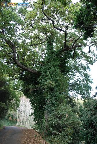 CZ-Lamezia terme-Acquafredda il bosco 7187_L