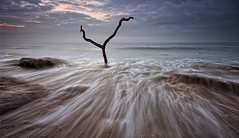 Tidal Rush [explored] (Mark Leader) Tags: seascape tree art beach print poster dead coast rocks waves tide wallart canvas shore rush secluded dcor wallhanging