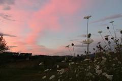 Pink and Lace (ΞSSΞ®®Ξ) Tags: sunset night pentax k5 ξssξ®®ξ pwpartlycloudy