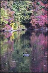 _DSC3928 (startowa13) Tags: nyc fall nature zeiss centralpark sony 13518 zeiss135mmf18 a7s