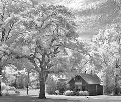 Tree and Post (Neal3K) Tags: trees bw clouds georgia ir newspaper blackwhite infraredcamera vintagebuilding knoxvillega kolarivisionmodifiedcamera thegeorgiapost