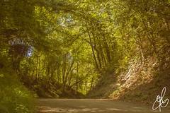 Galleria Naturale (Torchia Marco) Tags: monferrato fabiano solonghello nikon d7200 35mm f18 piemonte sottobosco strade vegetazione
