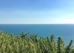 Lulworth Cove and Durdle Door (imcountingufoz) Tags: gorse plant horizon beach coast durdledoor jurassiccoast uk england southcoast sea