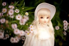 Arnica (koroa) Tags: bluefairy bf amy bjd doll sd