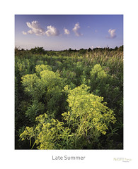 Late Summer (baldwinm16) Tags: il illinois midwest prairie sunset wildflowers native goldenrod summer august nature natureofthingsphotography