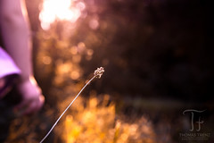 Move Forward (Thomas TRENZ) Tags: nikon sonneuntergang tamron thomastrenz d600 girl heat iamnikon intothelight intothesun macro marko mdchen natur nature sunset warm way weg