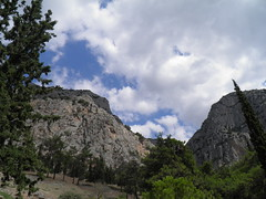 Delphi (dr.heatherleemccarthy) Tags: delphi greece trees mountain mountainside