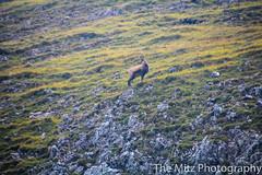 IMG_3467 (The Mitz Photography) Tags: gams grünersee hochschwab mariazell maryclan murmerl mädels nebel pilgern sommer steinbock wandern