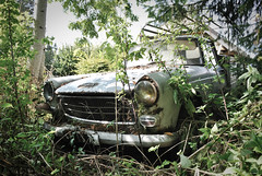 Peugeot 404 Pick Up t ( 73 ) (RicoFromMars) Tags: peugeot 404 pick up