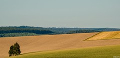 28082016-DSC_0019 (vidjanma) Tags: paysage courbes ardenne matin