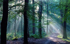 Magic is all around us (Greet N.) Tags: forest magic sunrays light september