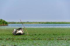 Romania : Fisherman (lown_c) Tags: romania nikon d7000 vsco danube delta fisherman landscape wate lake green blue lilys