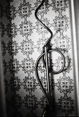 Serpent de douche (Sarah Devaux) Tags: serpent douche snake shower carrelage cabine tuyau nb noiretblanc argentique silver bruit noise motif vieux old hanté haunted tiles pipe intérieur appartement bordeaux salledebain