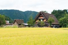 Mid-Autumn (Wunkai) Tags: nogun gifuken japan shirakawa  paddy    ogimachi  thatchedroof