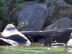 Abel tasman national park 08