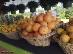 Fruit Stand (scottnj) Tags: fruit vegetable vegetablestand market scottnj cy365 scottodonnellphotography citrus basket baskets basketoffruit fruitbasket redditphotoproject 261366 farmersmarket reddit365