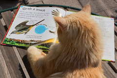 Grab a snack ! (FocusPocus Photography) Tags: linus katze kater cat chat gato tier animal haustier pet buch book liest reading vgel birds grabasnack