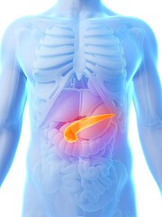 Pancreas (mghresearchinstitute) Tags: human system liver bladder spleen hepatic isolated model physiology crosssection white medical digestive tissue digital muscle cancer medicine illustration scientific object section endocrine pancreas body science cut digestion anatomy internal background organ health anatomical single duodenum healthcare dissection 3d