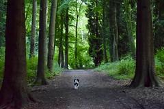 DSC_0096 (chriswilliams23) Tags: woodland coombehillwoods littleredridinghood