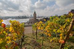 Fall in Hamburg (Elbmaedchen) Tags: herbstmotiv hamburgerhafen landungsbrücken hamburg weintrauben stintfang autumn fall