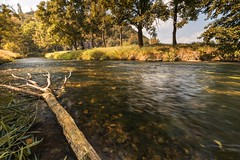 Tree trunk fell into the water (tomaskriz1) Tags: trunk romantic morning surface mirroring moravian water view valley tree sky scene rural nature natural leaf landscape green grass forest country beautiful background