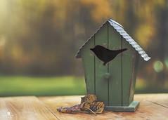 fall retreat (rockinmonique) Tags: birdhouse fall autumn leaves leaf green gold orange light texture quaint country charming moniquew canon canont6s helios442 copyright2016moniquewphotography