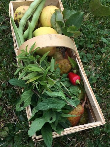 Garten und Lisas chilli