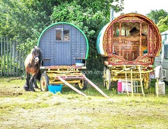 Brigg horse fair (Snapdragon Lincs) Tags: sell buy fun yearly tradition colourful caravan community travellers lincolnshire fair horse brigg