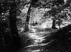 C645_TMax100_0008 (dmitriy.marichev) Tags: carlzeisssonnart140mmf28 14028 sonnar zeiss photo picture light shadow two tree film kodak tmax contax mf classic 140mm carlzeiss dmitriymarichev kiev ukraine monochrome bw