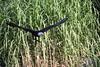 Weißkopfseeadler (Vasquezz) Tags: wildpark wildparklüneburgerheide wildlifepark lüneburgheathwildlifepark lüneburgerheide lüneburgheath weiskopfseeadler baldeagle adler eagle raubvogel birdofprey haliaeetusleucocephalus twitter