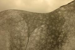 Silver (moriny) Tags: m9 summicron35mmasph filtre orange