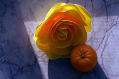 Tangerine (D()MENICK) Tags: aaw active assignment weekly tangerine rose granite marble floor sun bestofweek1 bestofweek2