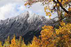 Fall in the Rockies (Quincey Deters) Tags: 2015 alberta allrightsreserved autumn canada canadianrockymountains cloud colourimage fall fallcolours forest frame horizontal jasper jaspernationalpark landscape mountain nature northamerica outdoor peak september snow tree quinceydeters
