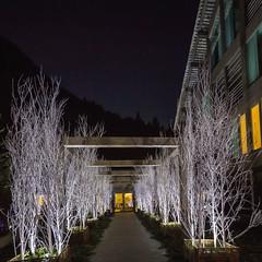 bit.ly/2ea3lgA  Un albergo che festeggia la magia del Natala tutto l'anno...  #mirtillorosso #hotel #monterosa #natale #hotellerie #magia #magic (hobohofficial) Tags: mirtillorosso hotel monterosa natale hotellerie magia magic