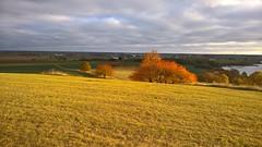 A luminous moment (J. Roseen) Tags: sunlight solljus light ljus fallcolors autumncolors hstfrger omberg hstholmen lumia950 pureview field flt clouds moln sverige sweden norden nordic skandinavien scandinavia landscape landskap outdoor friluftliv