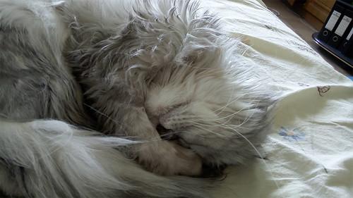 Sleeping Cat ©  Andrey