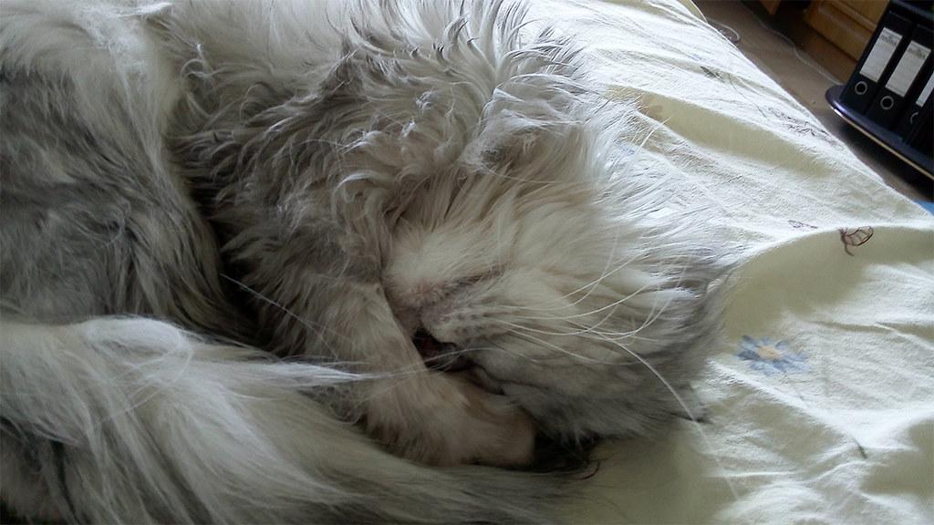 фото: Sleeping Cat